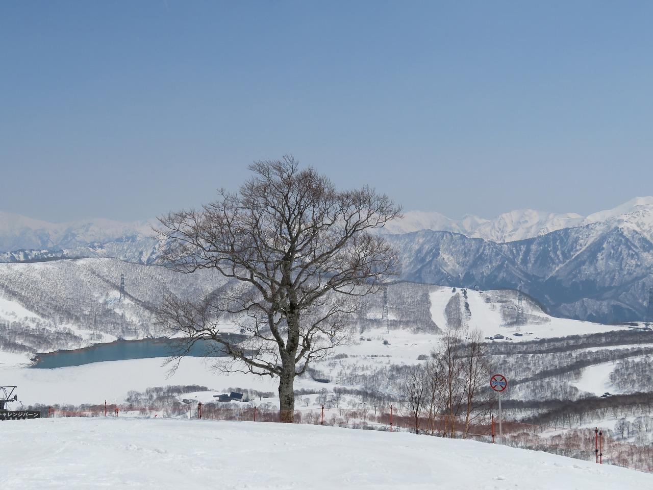 大人のスキー&ブナ